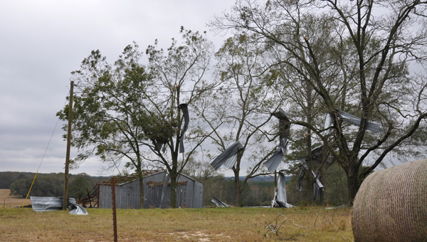 Tin from a barn on Live Oak Road litters trees and fields. Some of the tin was found 100 yards from the site. JOURNAL PHOTO | MONA MOORE