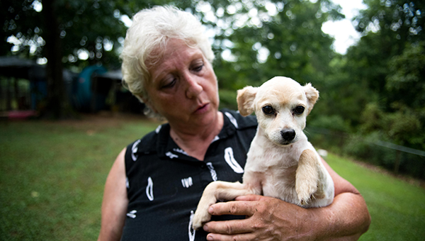 2nd Chance Animal Sanctuary owner Sandra Shaffer holds Sparkles, one of more than 40 dogs awaiting adoption at the sanctuary. (Photo by Keith McCoy)