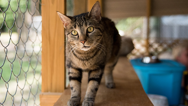 Gracie is one of about 15 cats at 2nd Chance Animal Sanctuary.
